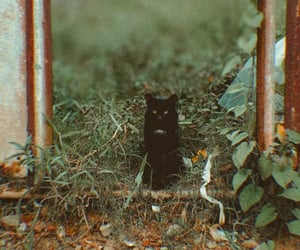 black cat, cat, and good lucky image