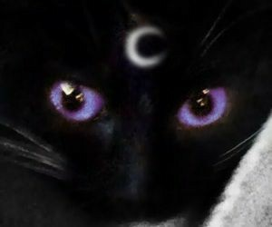 article, black cat, and realationship image