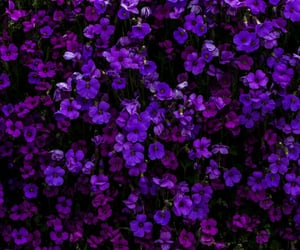 purple and flower image