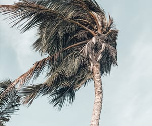 beach, coconut, and nature image