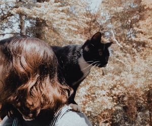 aesthetic, brown hair, and cat image