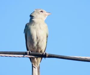 Animais, ave, and birdwatching image