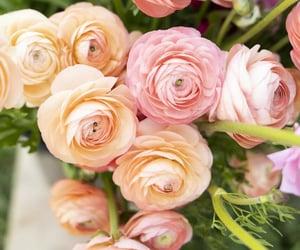 belleza, primavera, and flores image