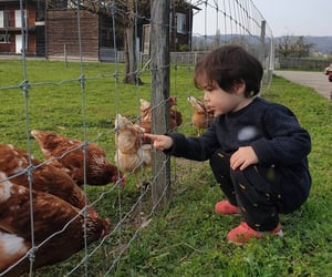asian, boys, and Chicken image