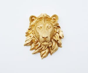 lion, gold, and aesthetic image