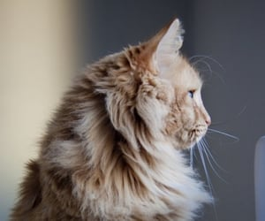 cat, animal, and photography image