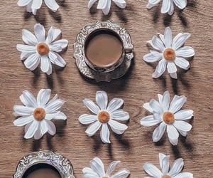 coffee, flower, and nature image