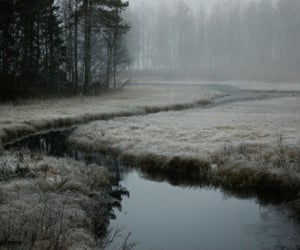 aesthetic, dark, and woods image