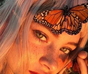 butterfly, aesthetic, and orange image