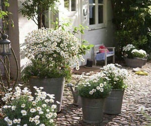 flowers, garden, and home image