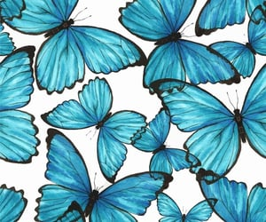 wallpaper, butterfly, and blue image