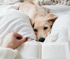 animal, dog, and book image