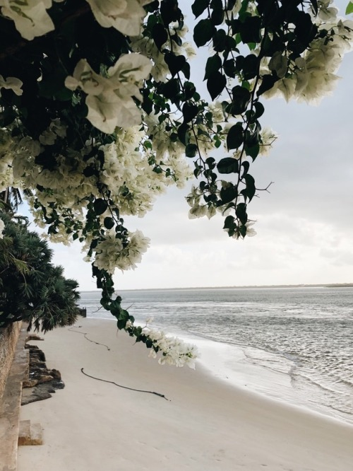 beach, travel, and ocean image