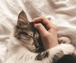 cats, hijab, and hope image