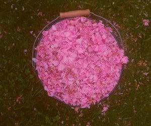 aesthetic, beauty, and garden image