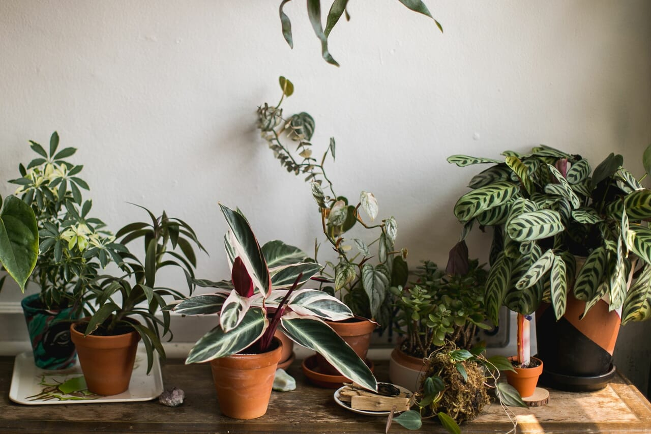 article, indoor, and houseplants image
