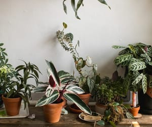 article, indoor, and houseplants image