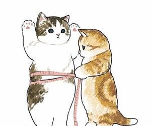 cat and قطط image