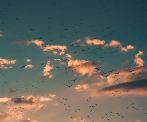 be free, birds, and fly image