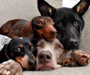 dogs, animals, and puppy image