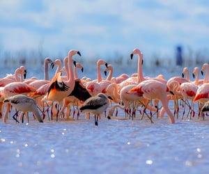 animal, flamingo, and bird image
