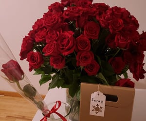 amazing, red roses, and bae image