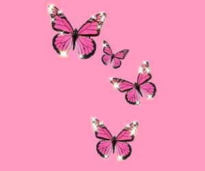 butterfly, pink, and fondo image