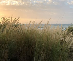 nature, beige, and summer image