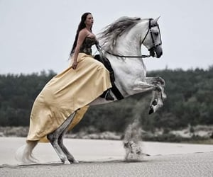 dressage, horseriding, and pony image