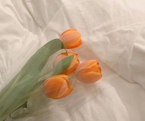 flowers, orange, and soft image