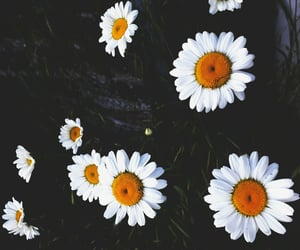 daisy, flowers, and hippie image