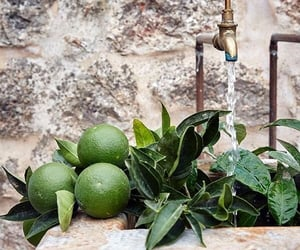 fruit and lime image