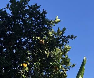 35mm, orange, and orange tree image