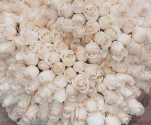 aesthetic, feed, and roses image