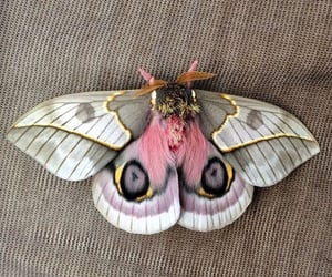moth, nature, and pink image