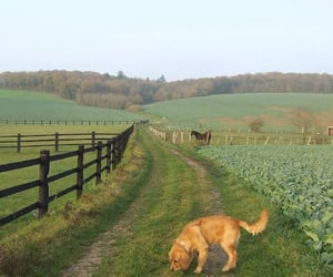 dog, horse, and green image