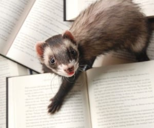 aesthetic, ferret, and cute image