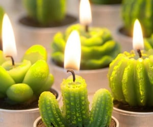 beauty, cacti, and candles image