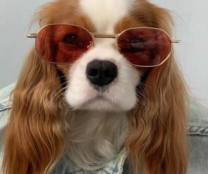 dog and sunglasses image
