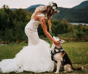 animal, casamento, and dog image