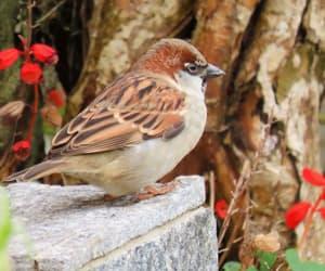 ave, birdwatching, and fotografia image
