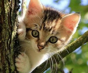 animal, felinos, and kittens image