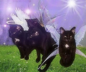 cat, aesthetic, and fairy image