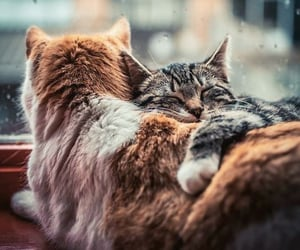 animal, cat, and friend image