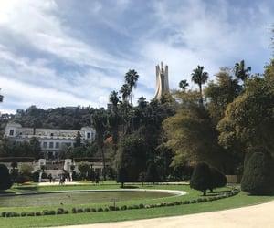 Algeria, nature, and palm trees image