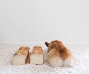 animal, bread, and brown image