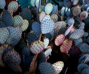cactus, blue, and plants image