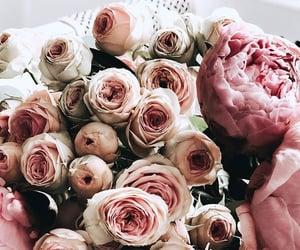 beautiful, blossom, and botanical image