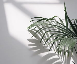 plant, wallpaper, and white image