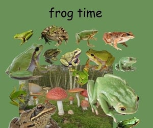 aesthetic, frog, and frogs image